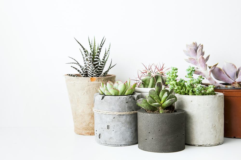 A beleza das plantas alivia o estresse
