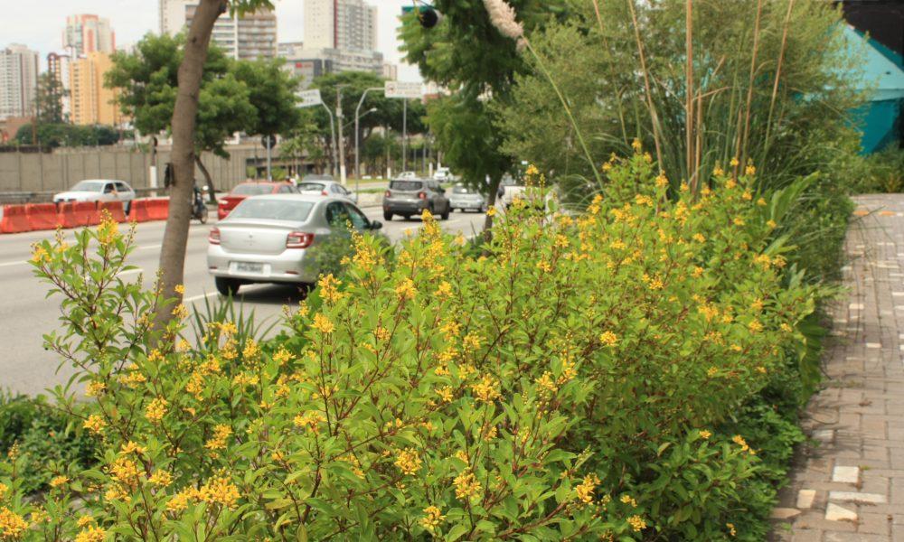 Reprodução de plantas nativas pela Porte Engenharia e Urbanismo